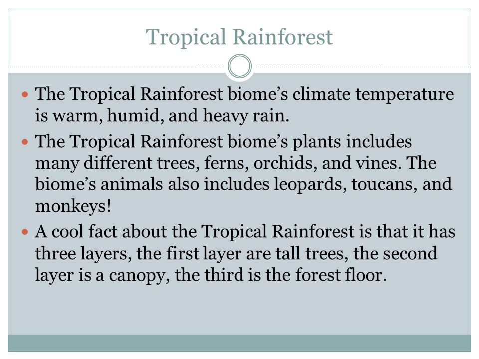 Tropical Rainforest The Tropical Rainforest biome's climate temperature is warm, humid, and heavy rain. The Tropical Rainforest biome's plants include