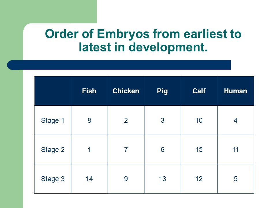 Order of Embryos from earliest to latest in development.