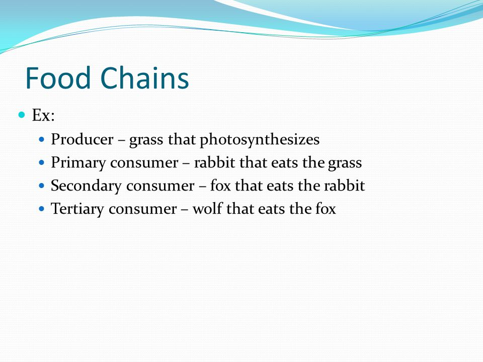 Food Chains Ex: Producer – grass that photosynthesizes Primary consumer – rabbit that eats the grass Secondary consumer – fox that eats the rabbit Ter