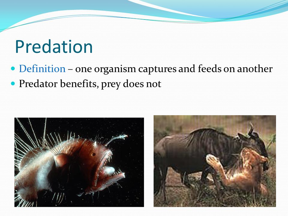 Predation Definition – one organism captures and feeds on another Predator benefits, prey does not