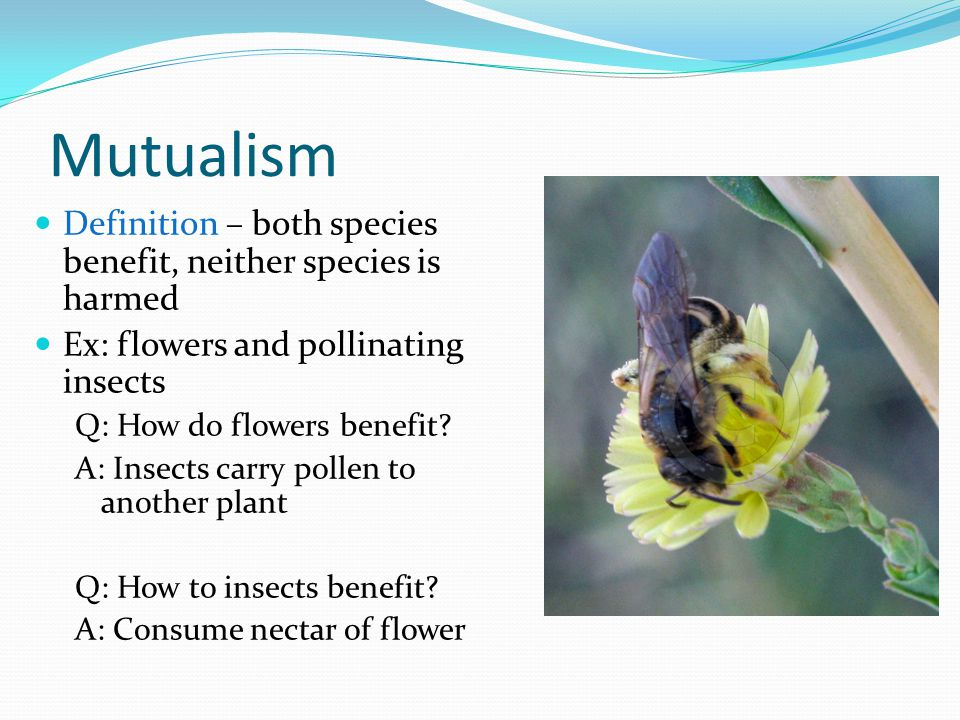Mutualism Definition – both species benefit, neither species is harmed Ex: flowers and pollinating insects Q: How do flowers benefit? A: Insects carry