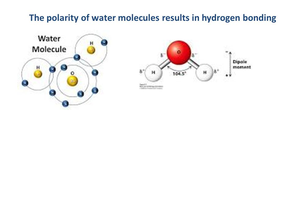 The polarity of water molecules results in hydrogen bonding