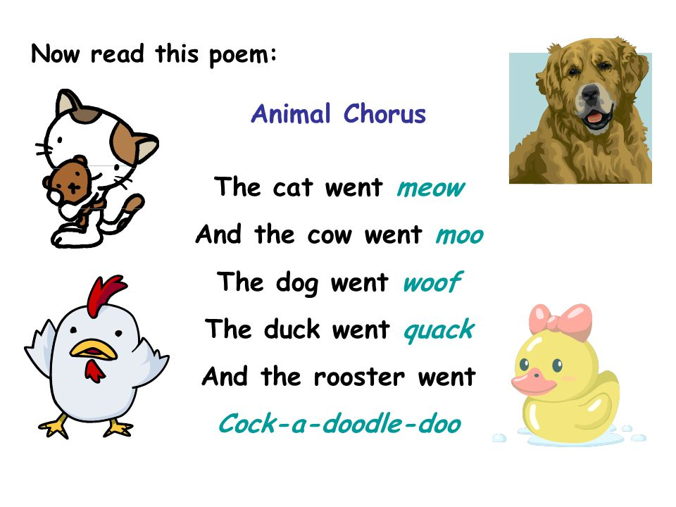 Now read this poem: Animal Chorus The cat went meow And the cow went moo The dog went woof The duck went quack And the rooster went Cock-a-doodle-doo