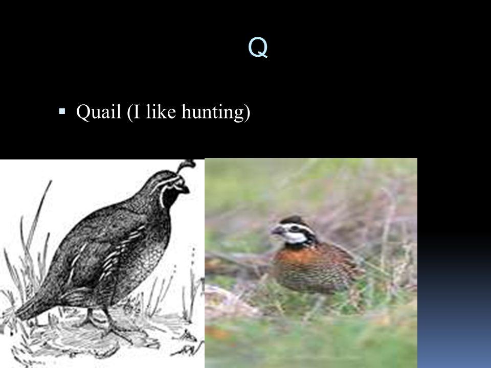 Q  Quail (I like hunting)