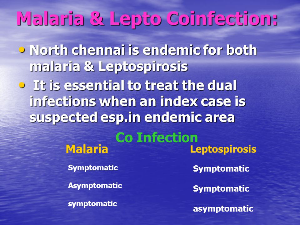 Malaria & Lepto Coinfection: North chennai is endemic for both malaria & Leptospirosis North chennai is endemic for both malaria & Leptospirosis It is essential to treat the dual infections when an index case is suspected esp.in endemic area It is essential to treat the dual infections when an index case is suspected esp.in endemic area Co Infection Malaria Leptospirosis Symptomatic Asymptomatic symptomatic Symptomatic asymptomatic