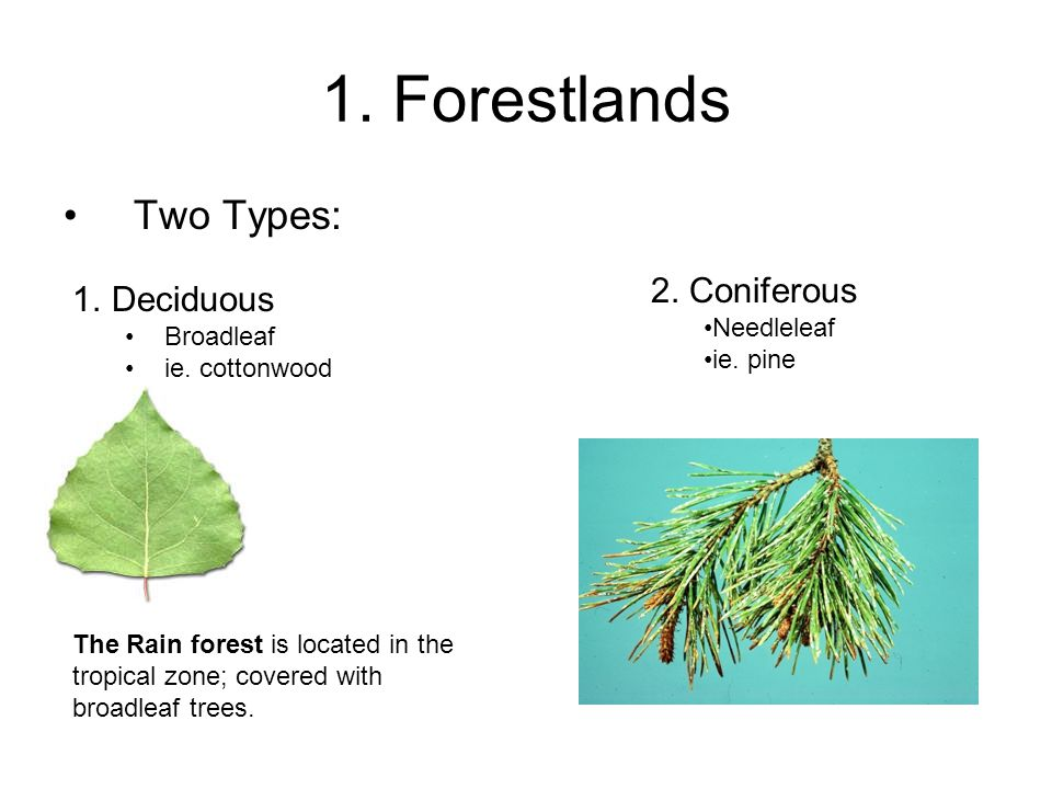 1. Forestlands Two Types: 2. Coniferous Needleleaf ie. pine 1.Deciduous Broadleaf ie. cottonwood The Rain forest is located in the tropical zone; cove