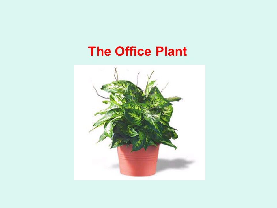 The Office Plant