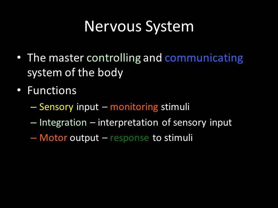 Nervous System The master controlling and communicating system of the body Functions – Sensory input – monitoring stimuli – Integration – interpretati
