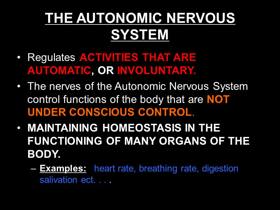 THE AUTONOMIC NERVOUS SYSTEM Regulates ACTIVITIES THAT ARE AUTOMATIC, OR INVOLUNTARY.