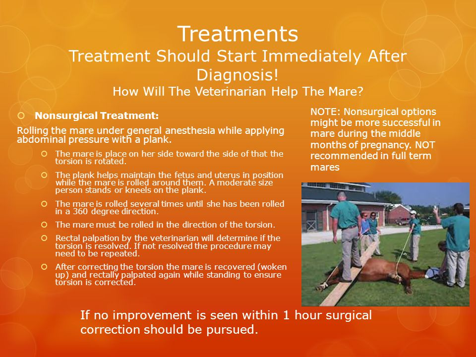 Treatments Treatment Should Start Immediately After Diagnosis! How Will The Veterinarian Help The Mare?  Nonsurgical Treatment: Rolling the mare unde