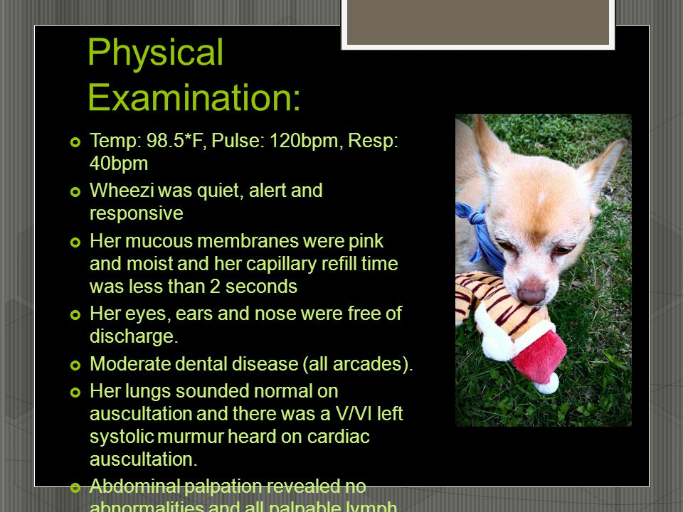 Physical Examination:  Temp: 98.5*F, Pulse: 120bpm, Resp: 40bpm  Wheezi was quiet, alert and responsive  Her mucous membranes were pink and moist and her capillary refill time was less than 2 seconds  Her eyes, ears and nose were free of discharge.