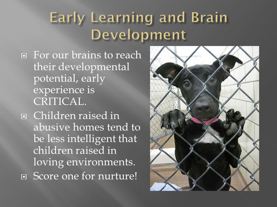  For our brains to reach their developmental potential, early experience is CRITICAL.  Children raised in abusive homes tend to be less intelligent