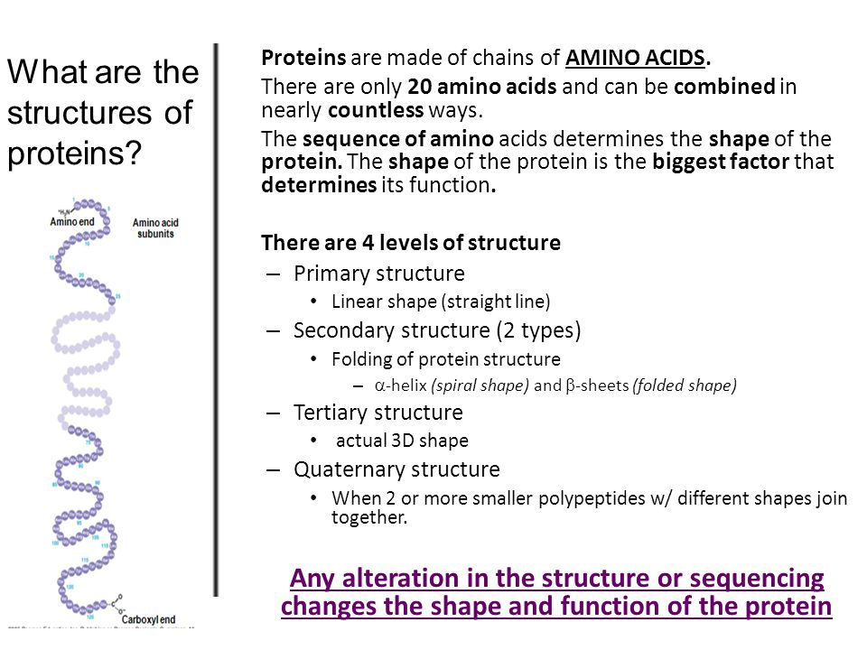 4. How does concentrati on of enzymes and substrate affects enzymes reactions.