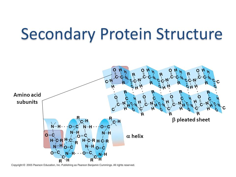 What are the structures of proteins. Proteins are made of chains of AMINO ACIDS.