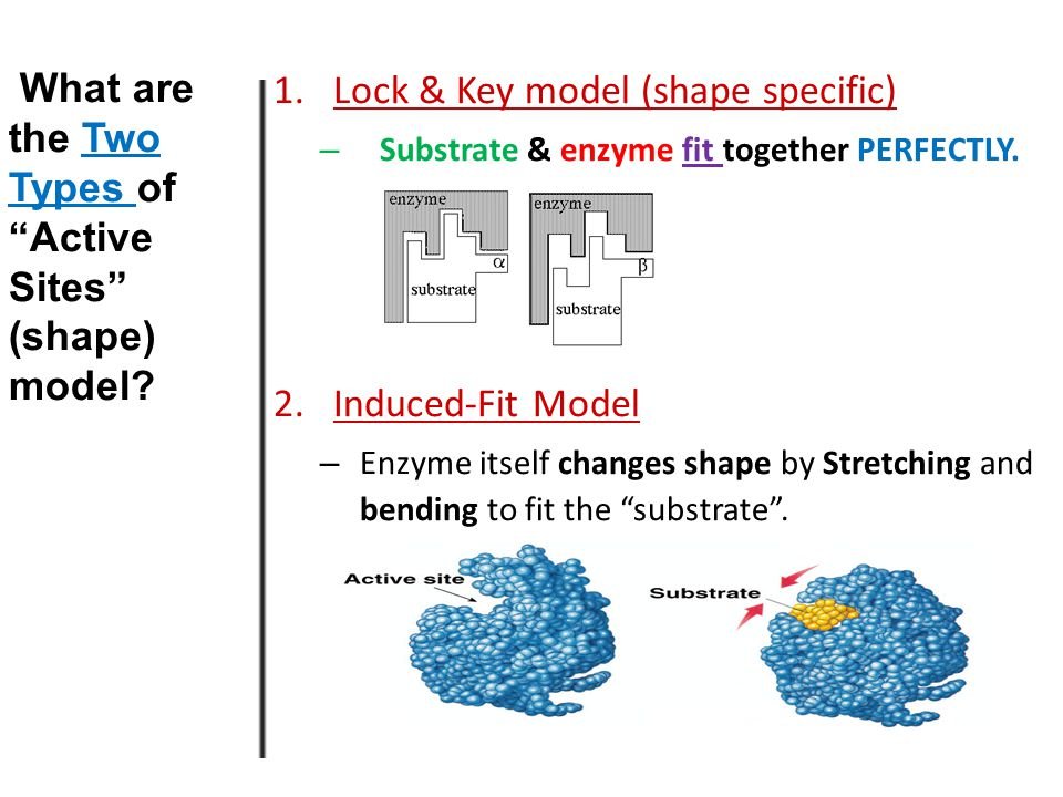 Other terms you need to know Substrate – the substance that the enzyme works on – e.g.