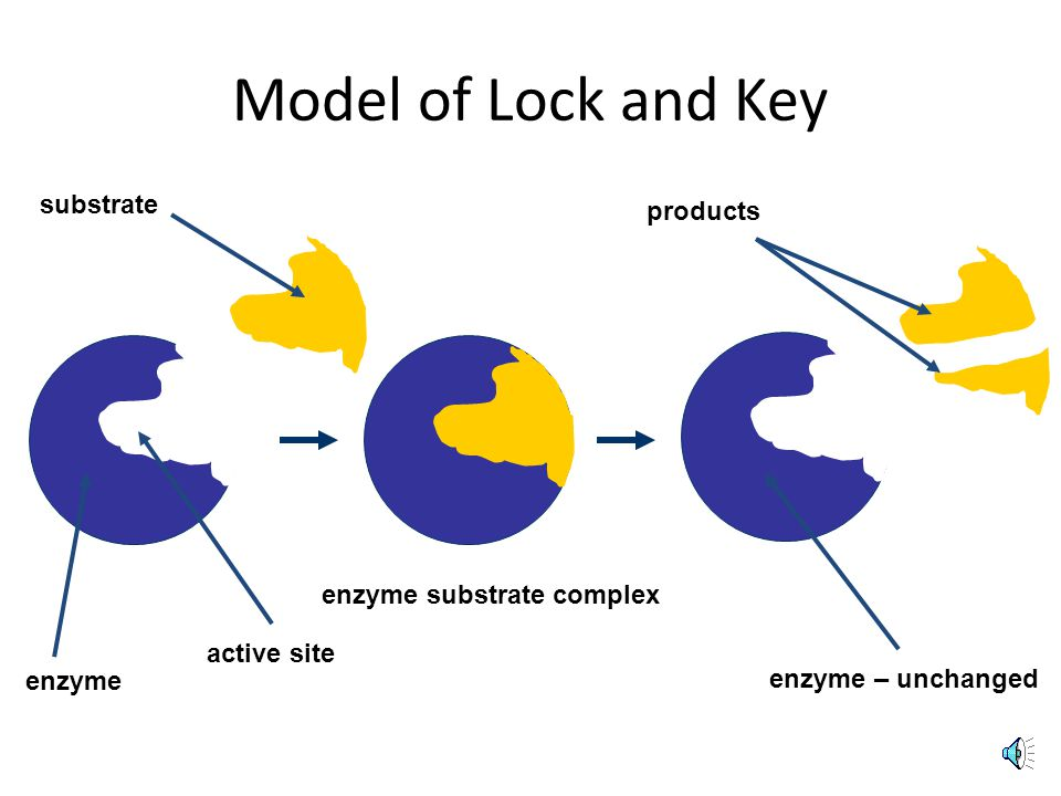 What are the Two Types of Active Sites (shape) model.