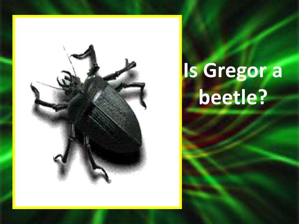 Is Gregor a beetle?