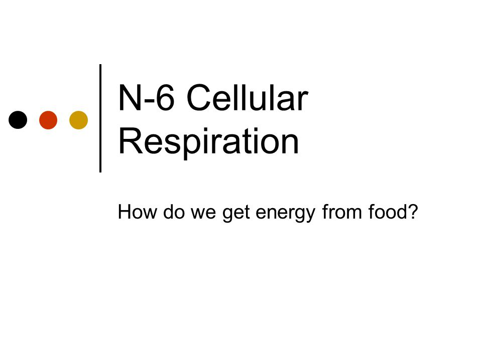 N-6 Cellular Respiration How do we get energy from food?
