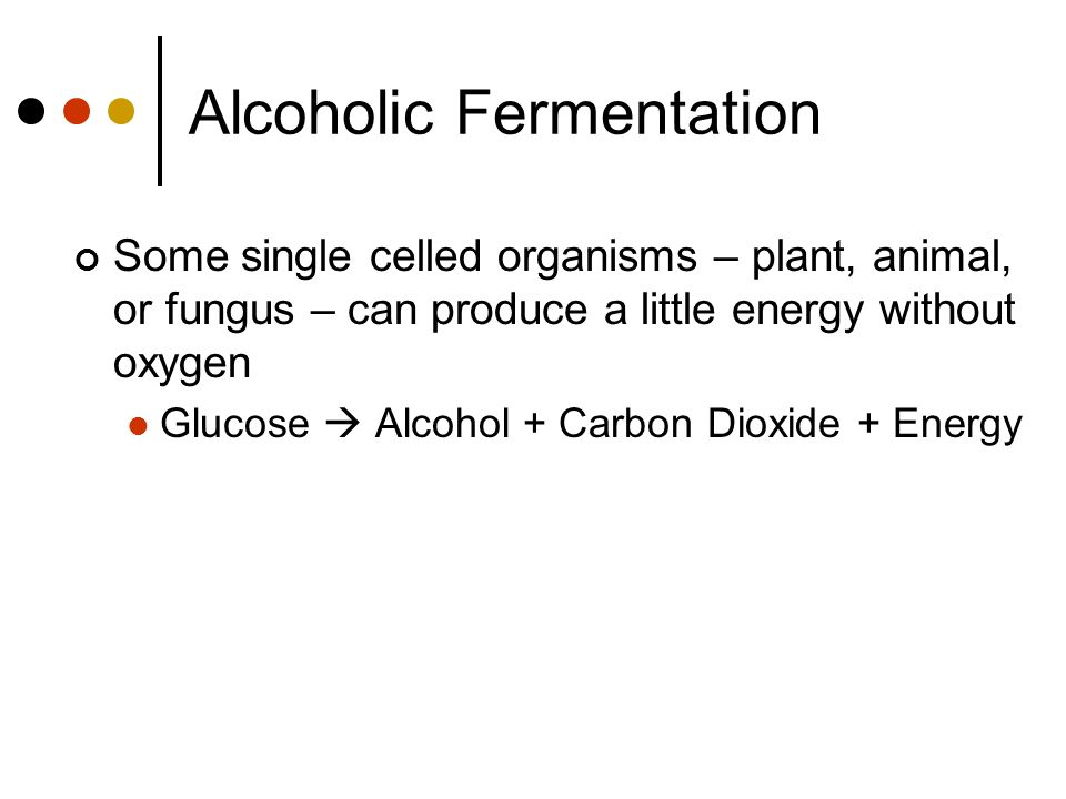 Alcoholic Fermentation Some single celled organisms – plant, animal, or fungus – can produce a little energy without oxygen Glucose  Alcohol + Carbon Dioxide + Energy