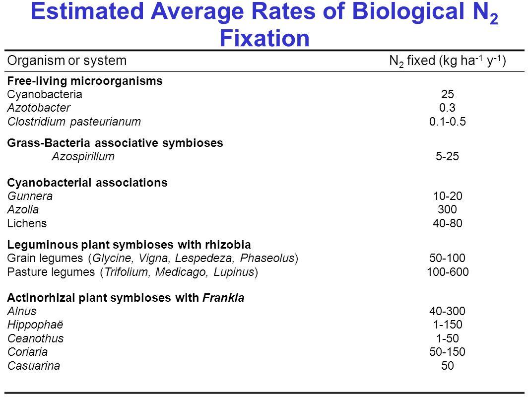 Estimated Average Rates of Biological N 2 Fixation 40-300 1-150 1-50 50-150 50 Actinorhizal plant symbioses with Frankia Alnus Hippophaë Ceanothus Coriaria Casuarina 50-100 100-600 Leguminous plant symbioses with rhizobia Grain legumes (Glycine, Vigna, Lespedeza, Phaseolus) Pasture legumes (Trifolium, Medicago, Lupinus) 10-20 300 40-80 Cyanobacterial associations Gunnera Azolla Lichens 5-25 Grass-Bacteria associative symbioses Azospirillum 25 0.3 0.1-0.5 Free-living microorganisms Cyanobacteria Azotobacter Clostridium pasteurianum N 2 fixed (kg ha -1 y -1 )Organism or system