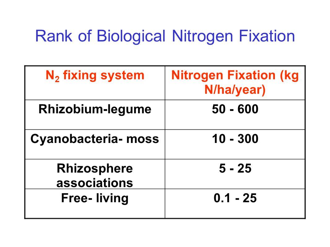 Rank of Biological Nitrogen Fixation 0.1 - 25Free- living 5 - 25Rhizosphere associations 10 - 300Cyanobacteria- moss 50 - 600Rhizobium-legume Nitrogen Fixation (kg N/ha/year) N 2 fixing system