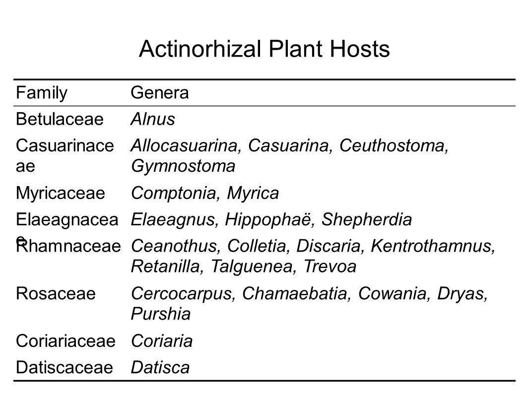 Actinorhizal Plant Hosts DatiscaDatiscaceae CoriariaCoriariaceae Cercocarpus, Chamaebatia, Cowania, Dryas, Purshia Rosaceae Ceanothus, Colletia, Discaria, Kentrothamnus, Retanilla, Talguenea, Trevoa Rhamnaceae Elaeagnus, Hippophaë, ShepherdiaElaeagnacea e Comptonia, MyricaMyricaceae Allocasuarina, Casuarina, Ceuthostoma, Gymnostoma Casuarinace ae AlnusBetulaceae GeneraFamily