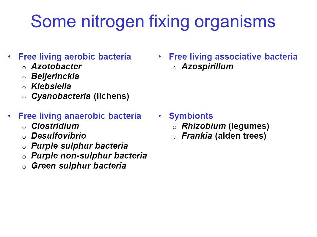 Some nitrogen fixing organisms