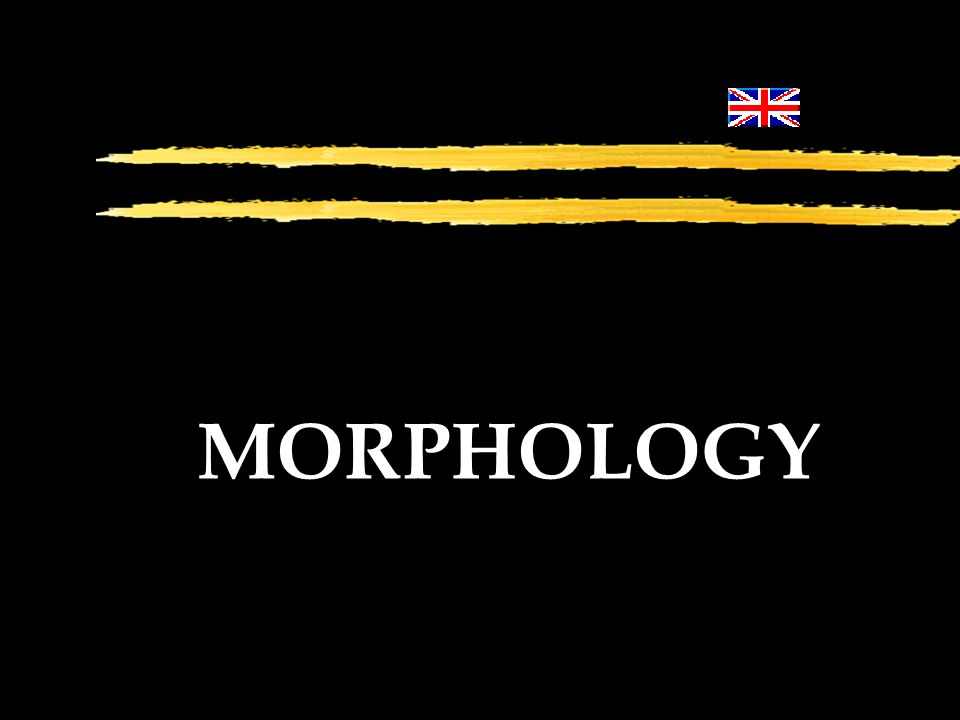 13 Morphology A branch of grammar which studies the Structure of Words.