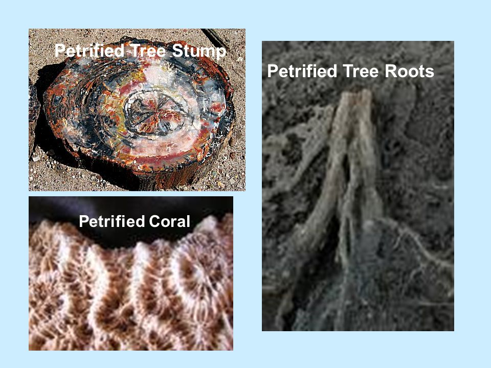 Carbon Films What it is: An extremely thin coating of carbon (all life contains carbon) on rock, usually black.