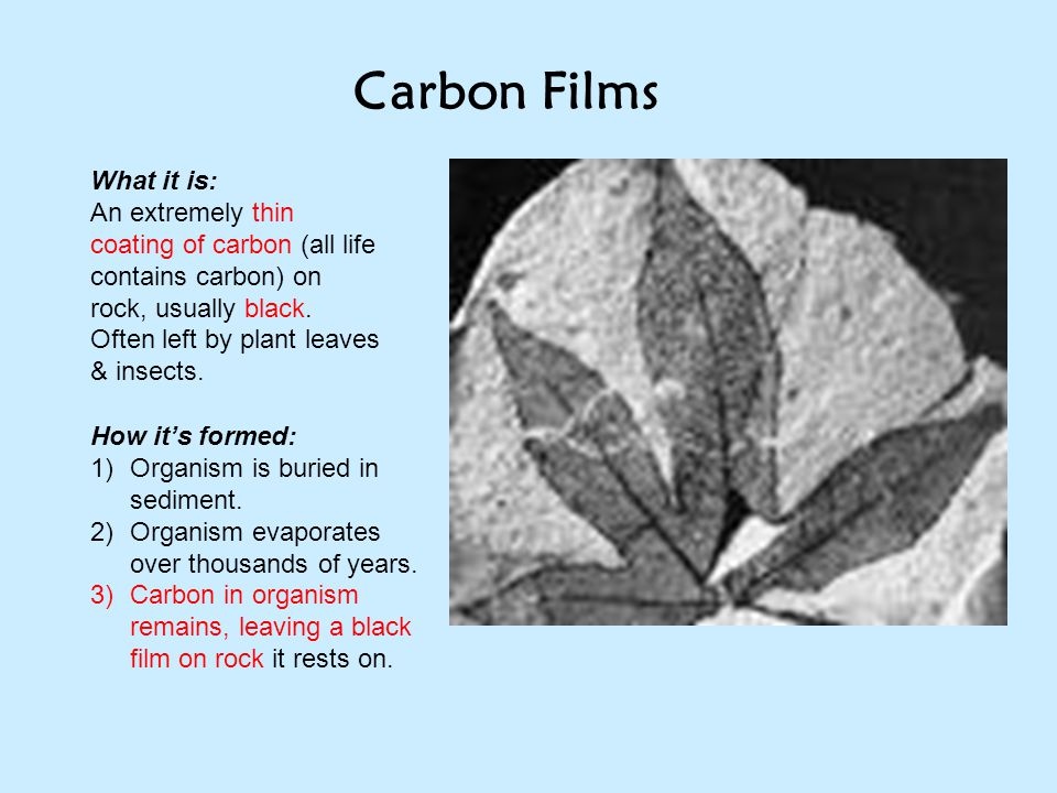 Carbon Films What it is: An extremely thin coating of carbon (all life contains carbon) on rock, usually black. Often left by plant leaves & insects.