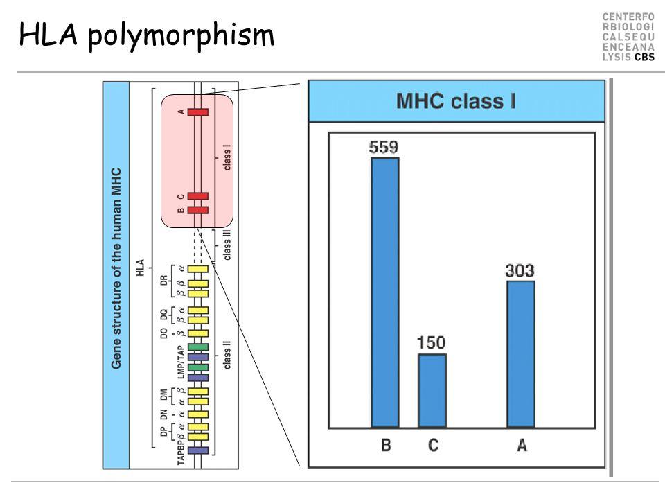 HLA polymorphism