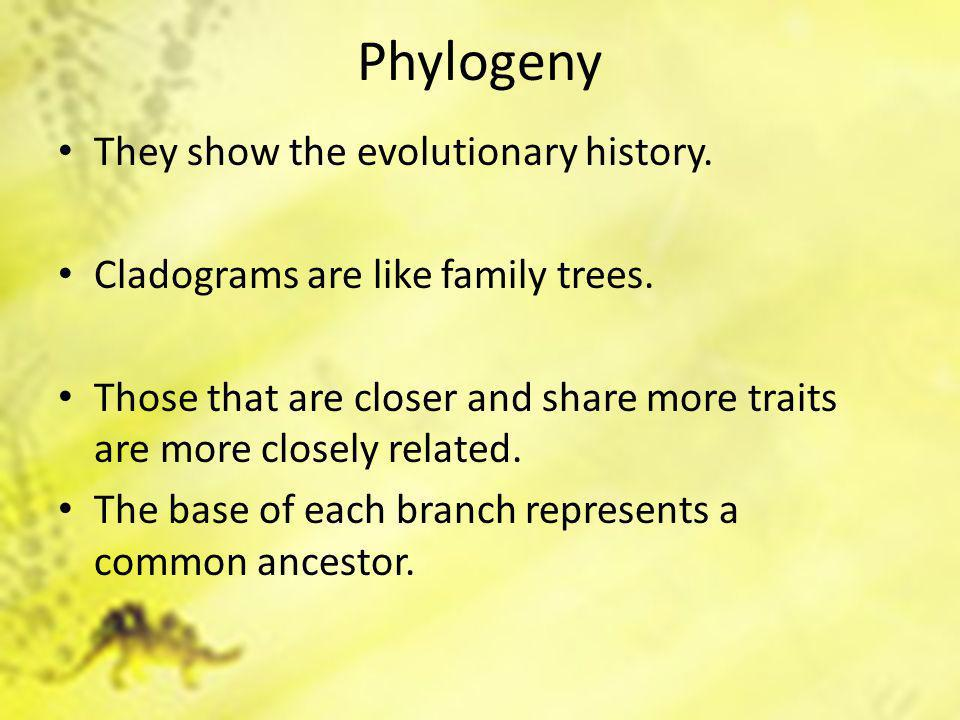 Phylogeny They show the evolutionary history. Cladograms are like family trees.