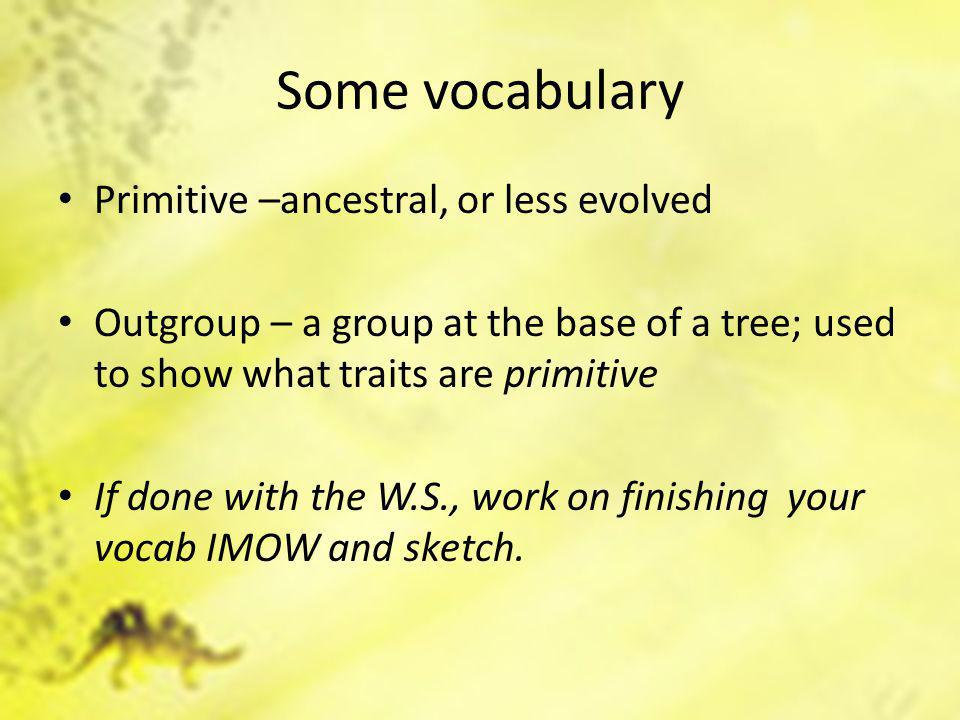 Some vocabulary Primitive –ancestral, or less evolved Outgroup – a group at the base of a tree; used to show what traits are primitive If done with the W.S., work on finishing your vocab IMOW and sketch.
