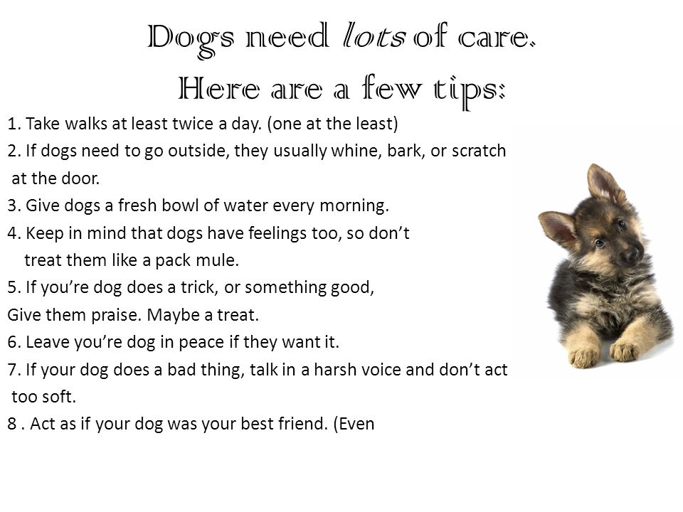 Dogs need lots of care. Here are a few tips: 1. Take walks at least twice a day.