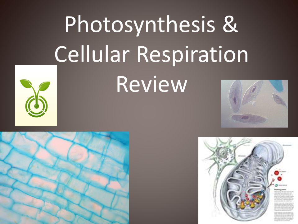 11) What are the products in photosynthesis.
