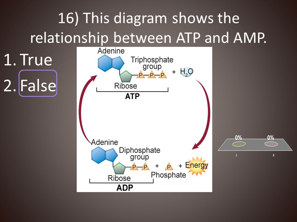 16) This diagram shows the relationship between ATP and AMP. 1.True 2.False
