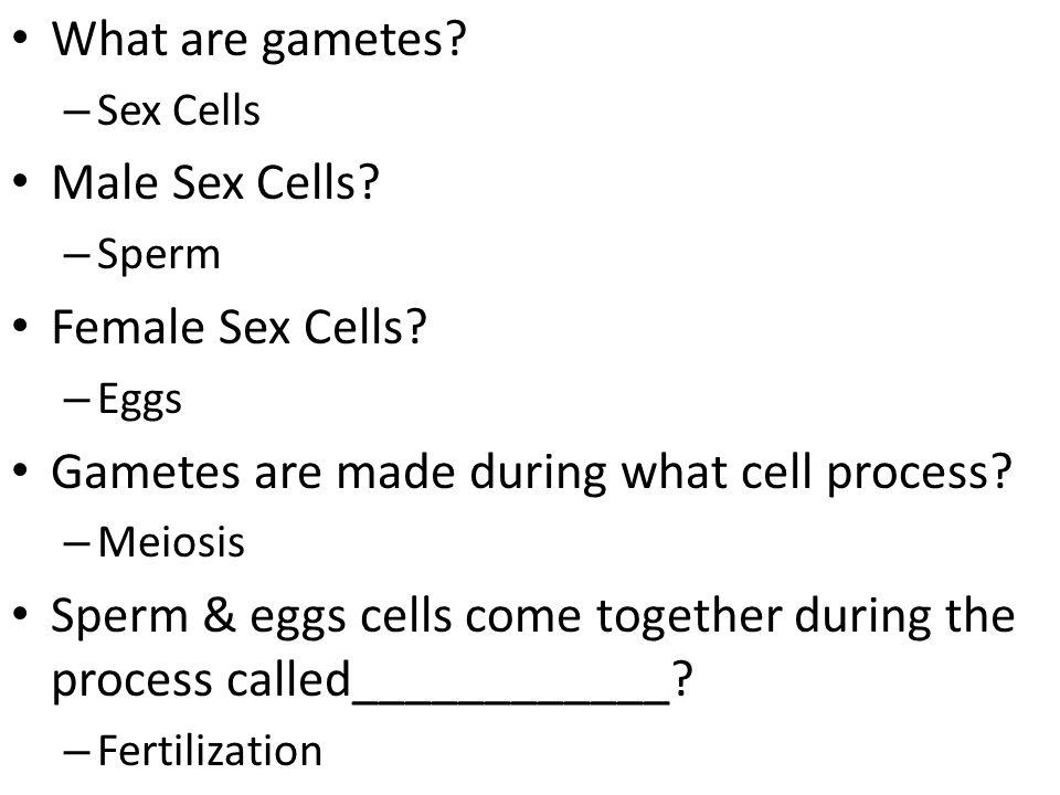 What are gametes.– Sex Cells Male Sex Cells. – Sperm Female Sex Cells.