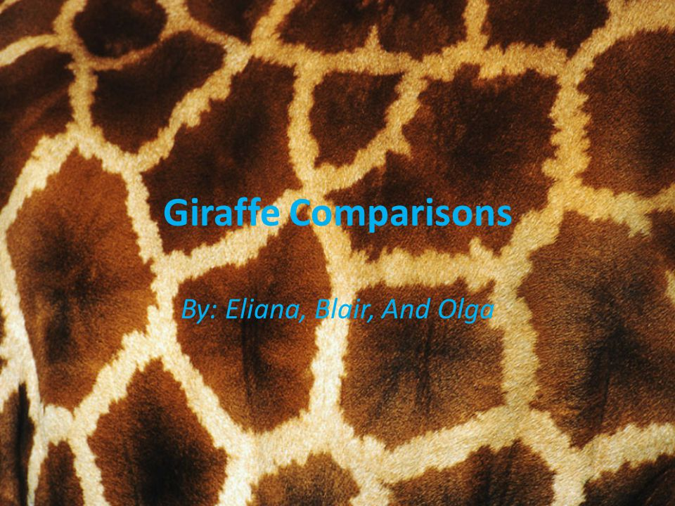 Giraffe Comparisons By: Eliana, Blair, And Olga