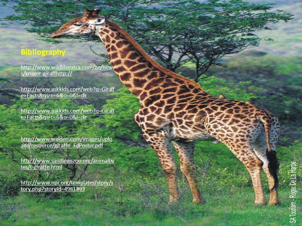 Bibliography http://www.wildlifeextra.com/go/new s/kruger-giraffhttp:// http://www.askkids.com/web?q=Giraff e+Facts&qsrc=6&o=0&l=dir http://www.askkid