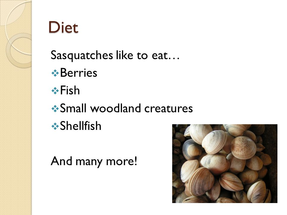 Diet Sasquatches like to eat…  Berries  Fish  Small woodland creatures  Shellfish And many more!