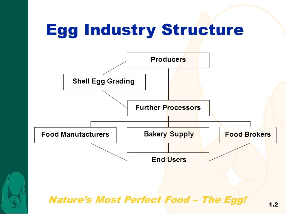 Nature's Most Perfect Food – The Egg! Egg Industry Structure Producers Shell Egg Grading Further Processors Bakery Supply Food ManufacturersFood Broke