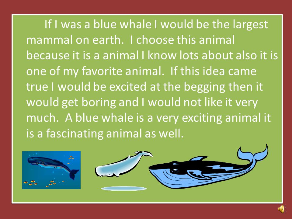 Me as a blue Whale By: Ariana Paragraph practice