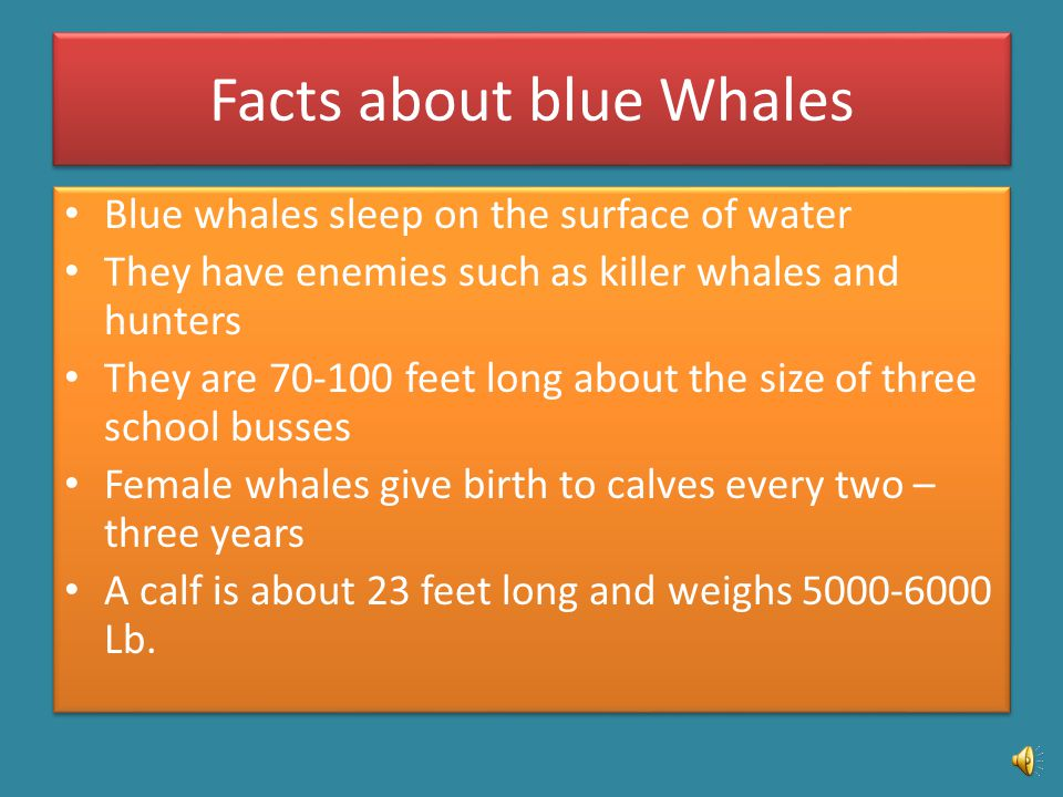 My life would be very different if I was a blue whale.
