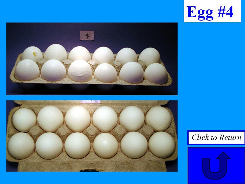 Egg #4 Click to Return