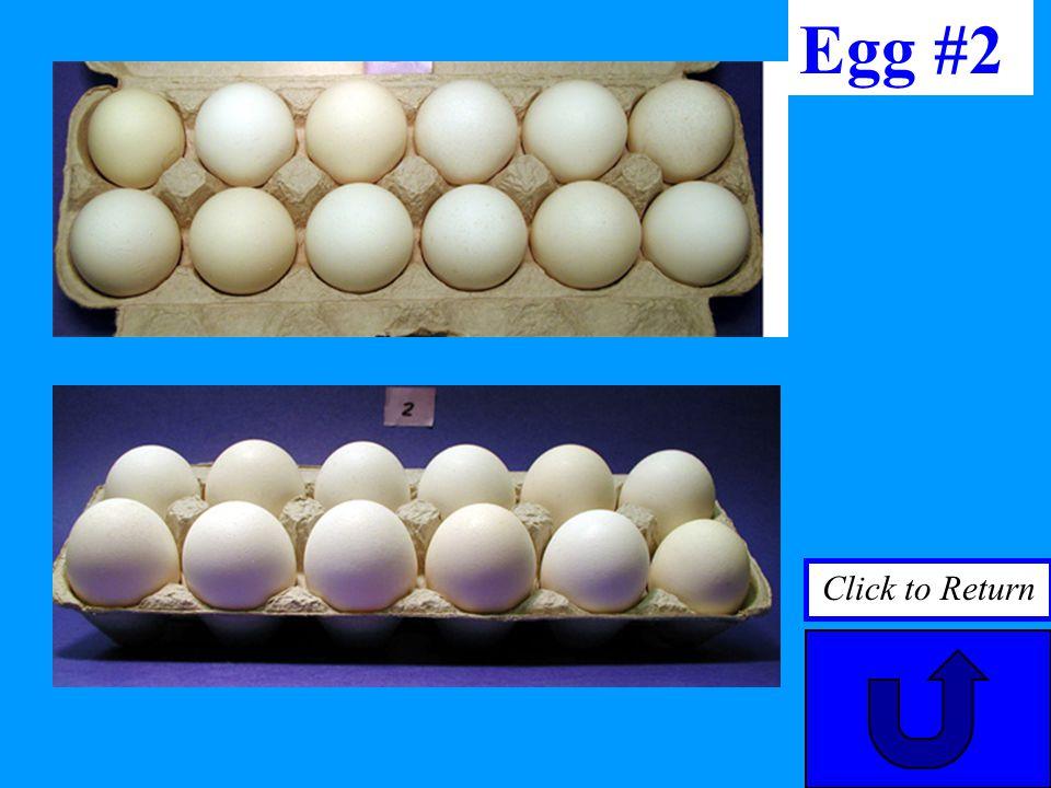 Egg #2 Click to Return
