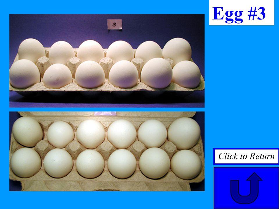 Egg #3 Click to Return