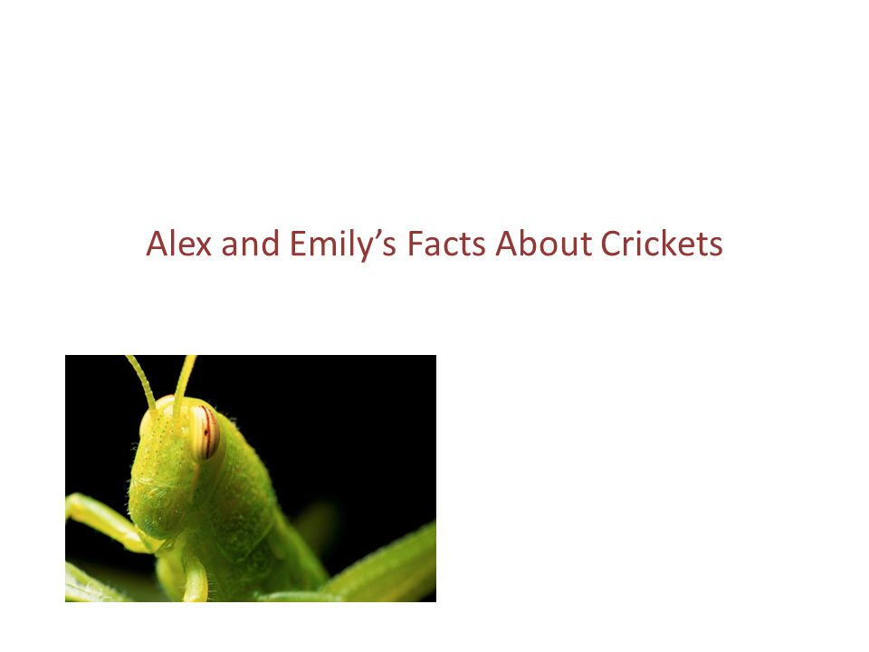 Alex and Emily's Facts About Crickets