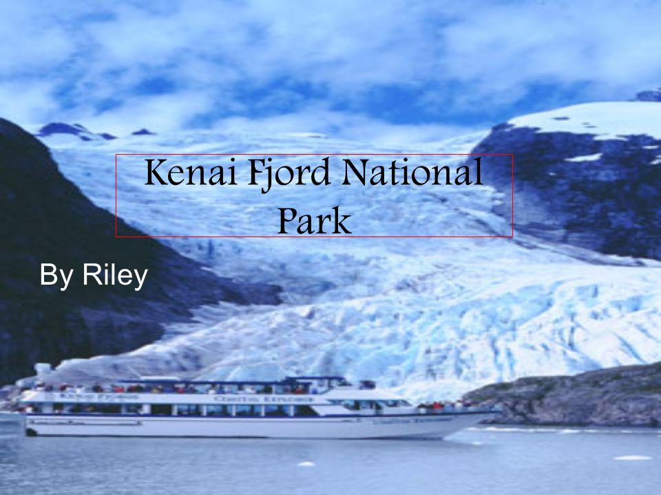 Kenai Fjord National Park By Riley