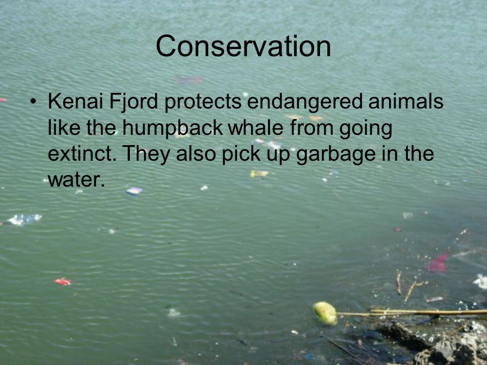 Conservation Kenai Fjord protects endangered animals like the humpback whale from going extinct.