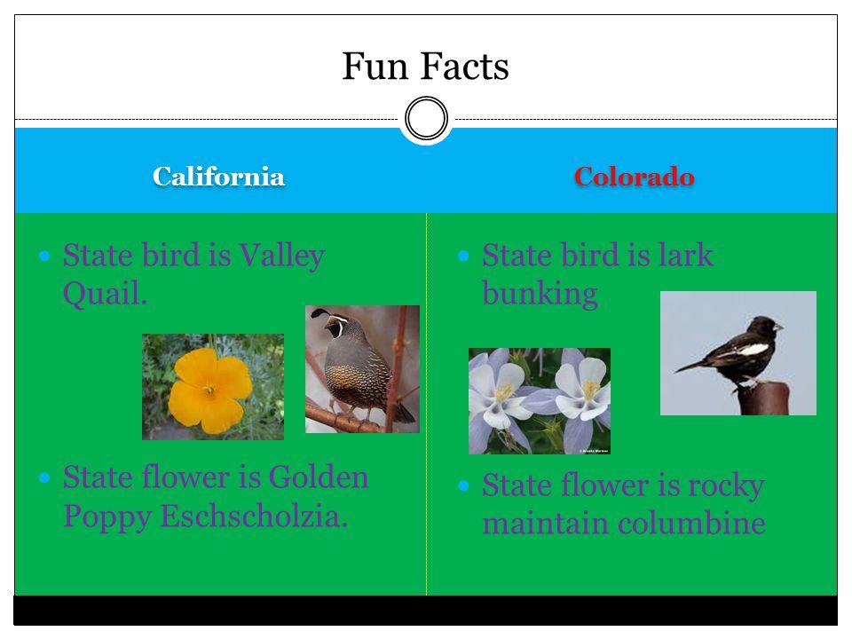 California Colorado State bird is Valley Quail. State flower is Golden Poppy Eschscholzia.